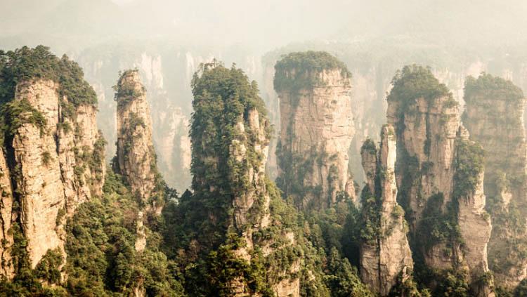 Los bosques sumideros naturales de CO2  Fundacin Aquae