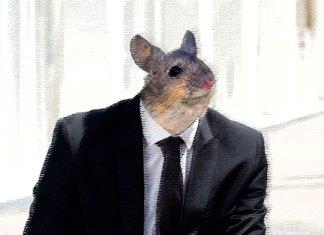 Cabezas de ratón