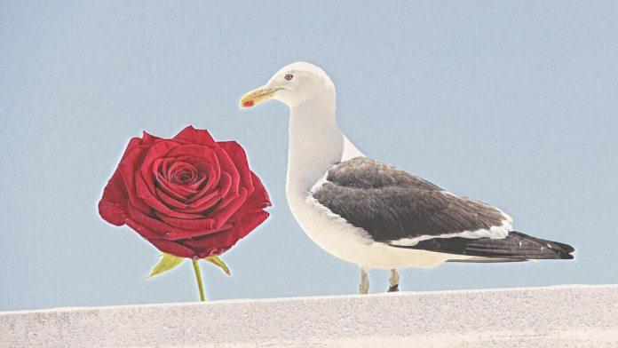 Entre la rosa y la gaviota
