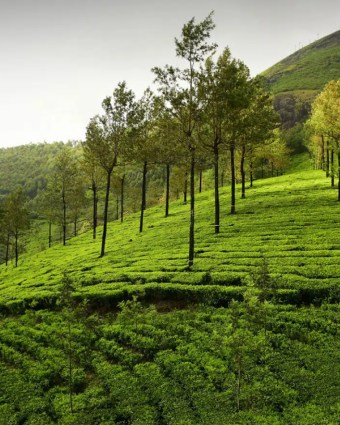 Munnar and Kochi – Weekend Getaway Package Tour