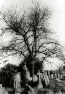 logo cimiteri2