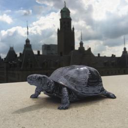 schildpaddoosje