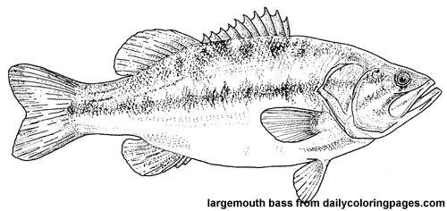 Red Drum Fish Coloring Sheets Coloring Pages