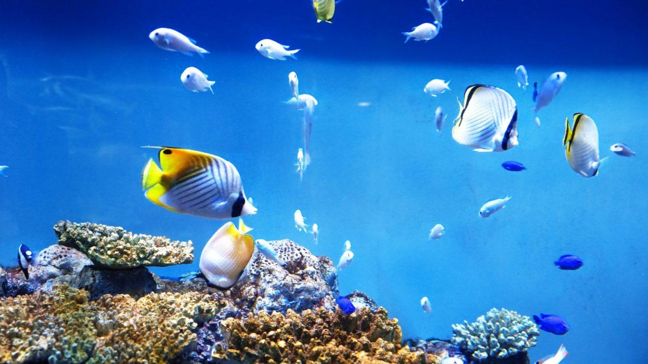 韓国の水族館へ行こう!現地の人気おすすめ水族館6選!