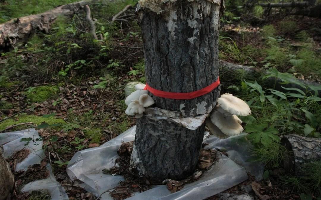 Garden Oyster Stack