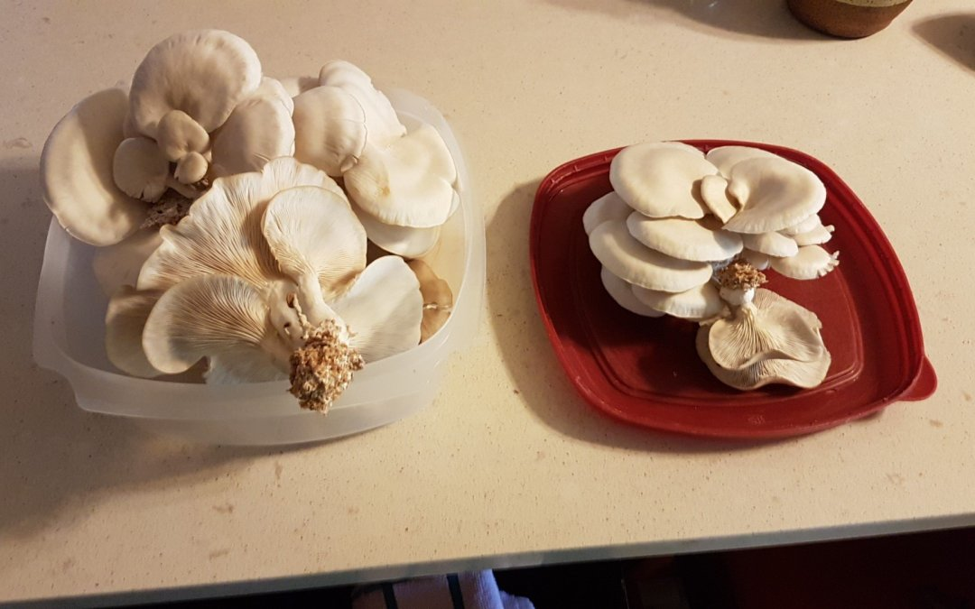 Harvest from the fungi greenhouse