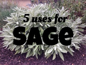 http://www.funhappinessandlife.com/five-uses-for-sage