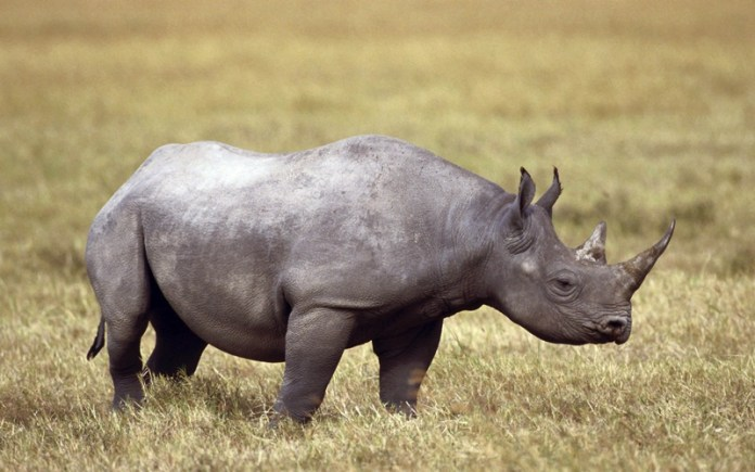 african-animals (2)