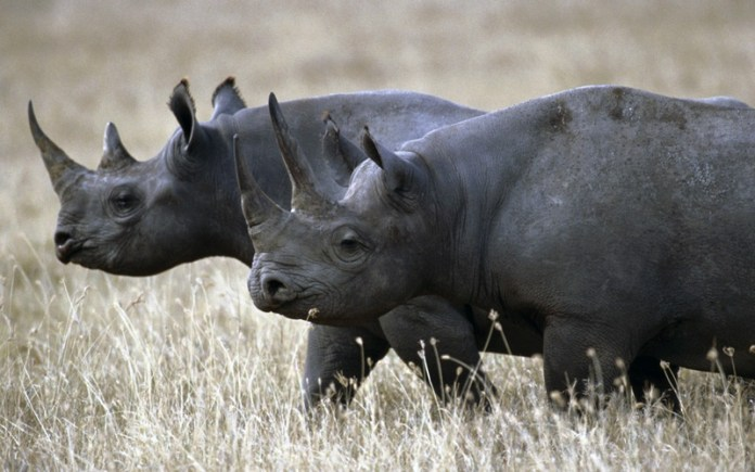 african-animals (7)