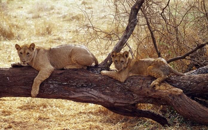 african-animals (12)