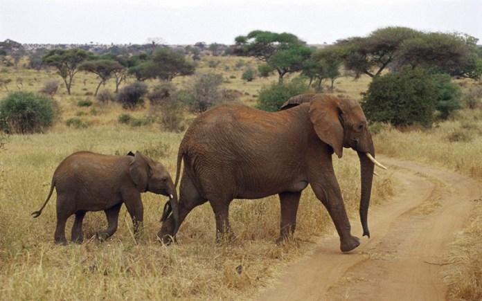 african-animals (15)