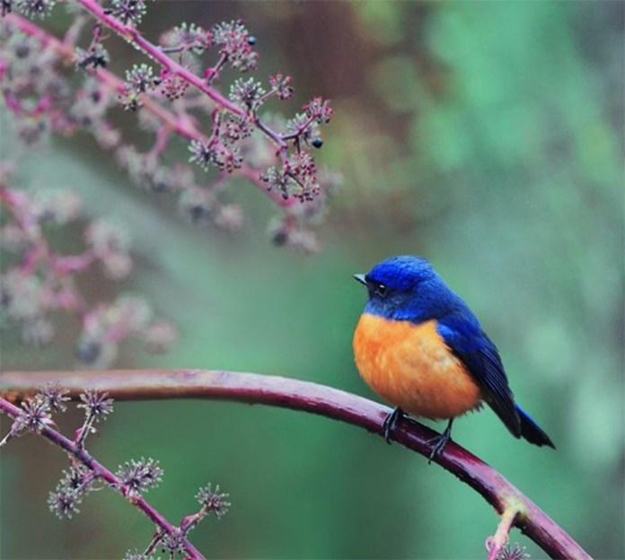 colorful bird (3)