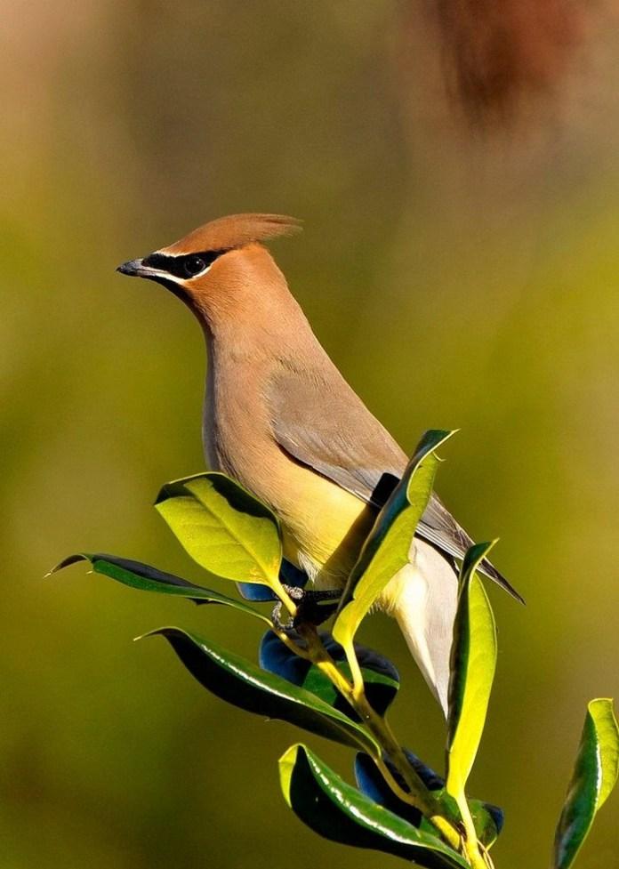 colorful bird (12)