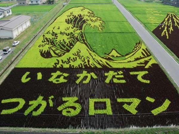 rice paddy art (6)