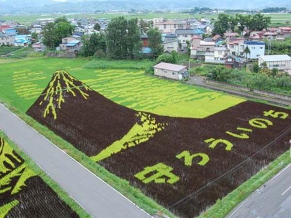 rice paddy art (9)