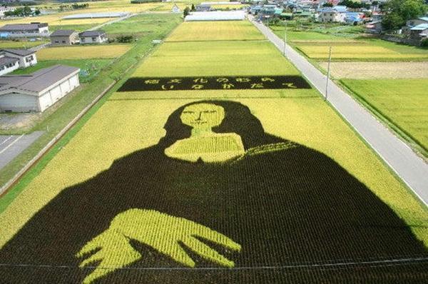rice paddy art (11)