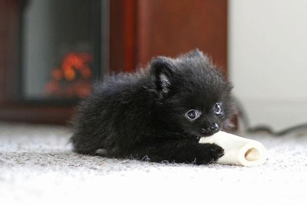 cute-baby-animals- (3)