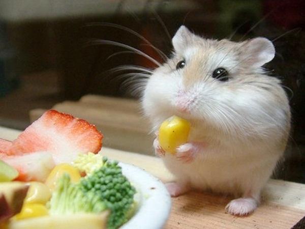 cute-baby-animals- (5)