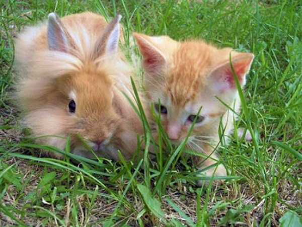 cute-baby-animals- (8)