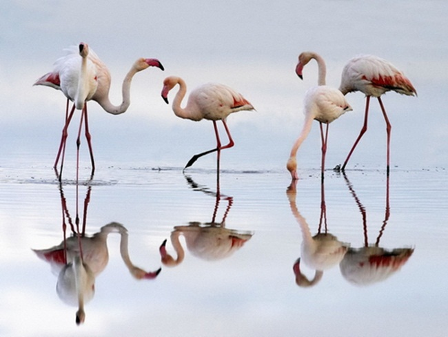 animals-and-birds- (6)