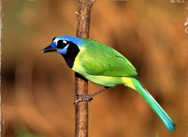 animals-and-birds- (16)