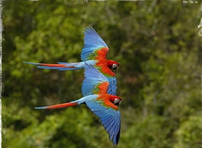 animals-and-birds- (17)