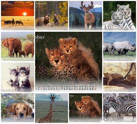 animals-calendar-2012