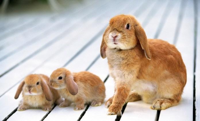cute-rabbit- (2)