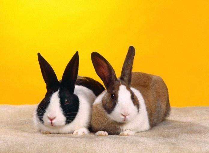 cute-rabbit- (6)