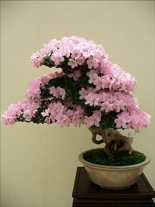 flower-bonsai-tree- (2)