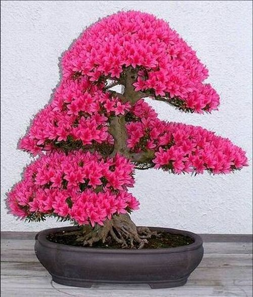 flower-bonsai-tree- (3)