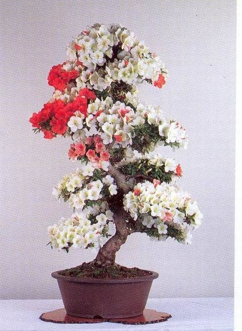 flower-bonsai-tree- (5)
