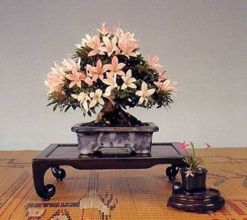 flower-bonsai-tree- (8)