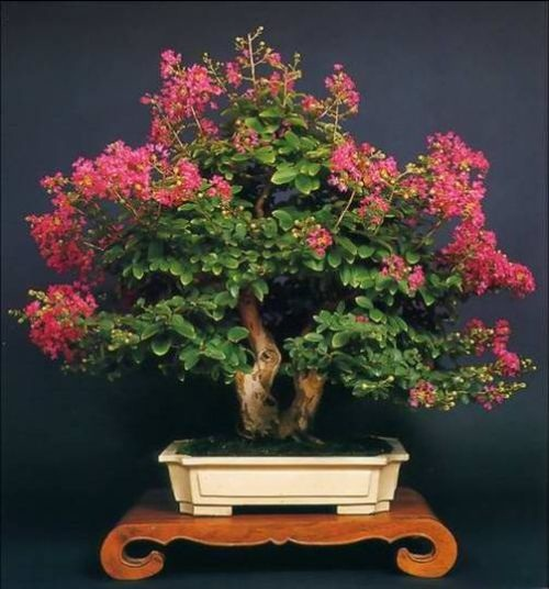 flower-bonsai-tree- (18)