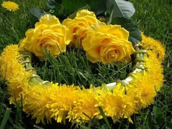 picture-of-yellow-roses- (12)