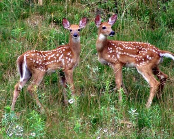 twin-animals- (1)
