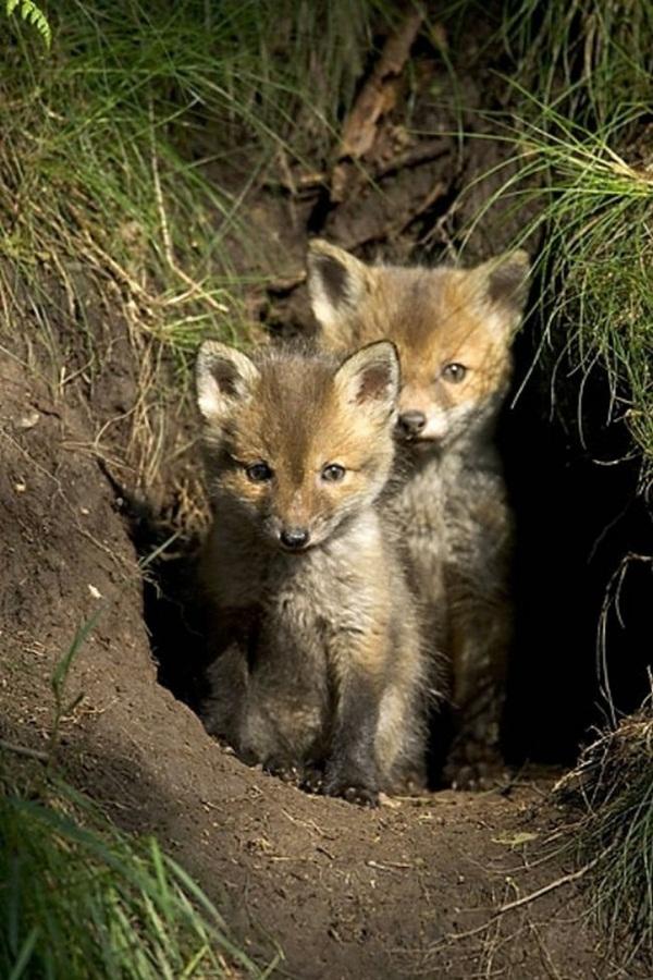 twin-animals- (4)