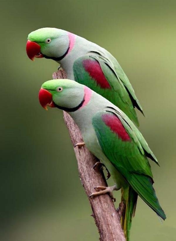 twin-animals- (8)