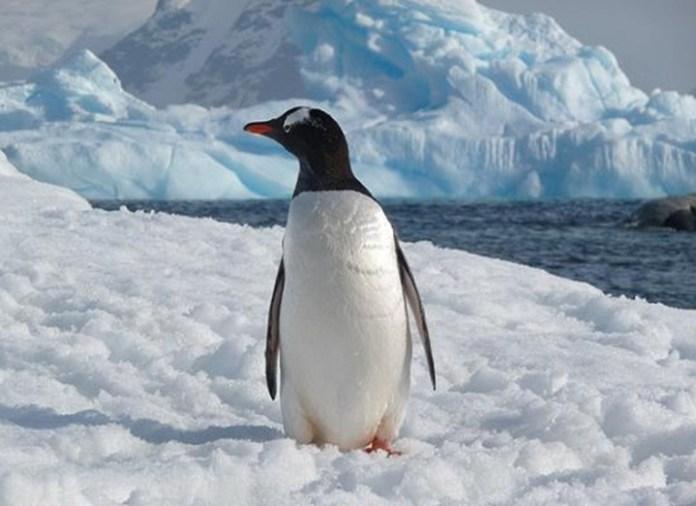breathtaking-photos-of-antarctica- (2)