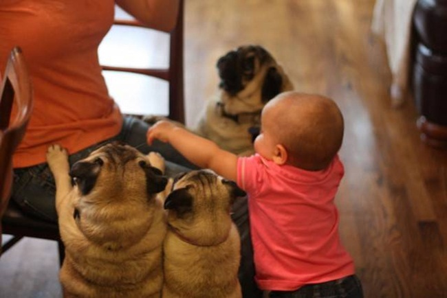 cute-babies-with-dogs- (3)