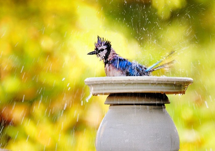 rain-photography- (1)