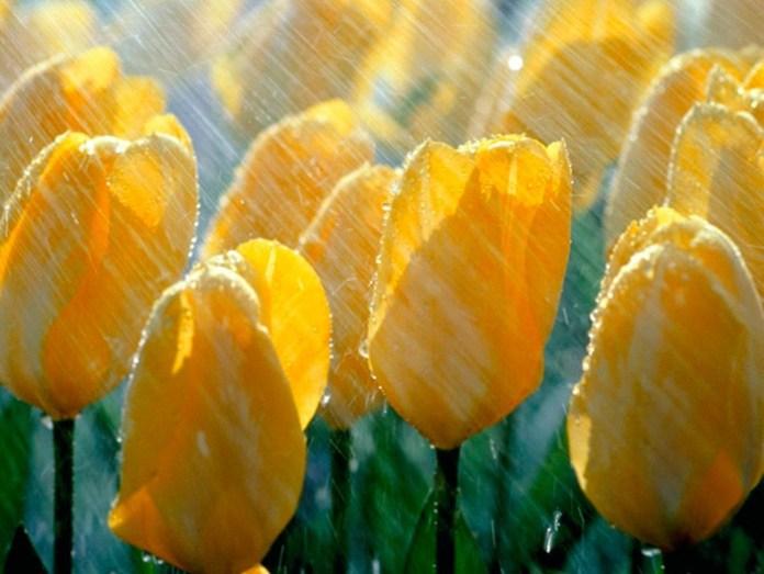 rain-photography- (13)