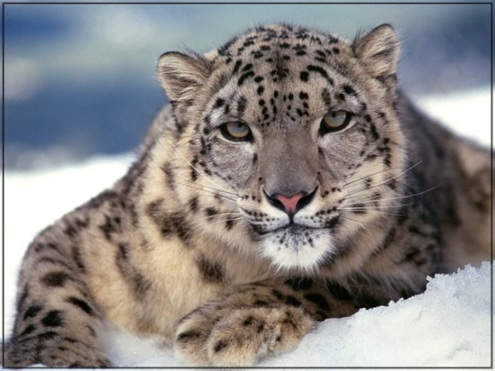 wildlife-photos- (2)
