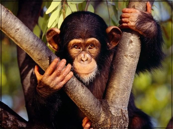 wildlife-photos- (3)