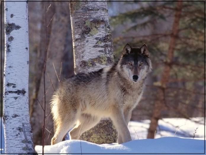 wildlife-photos- (4)