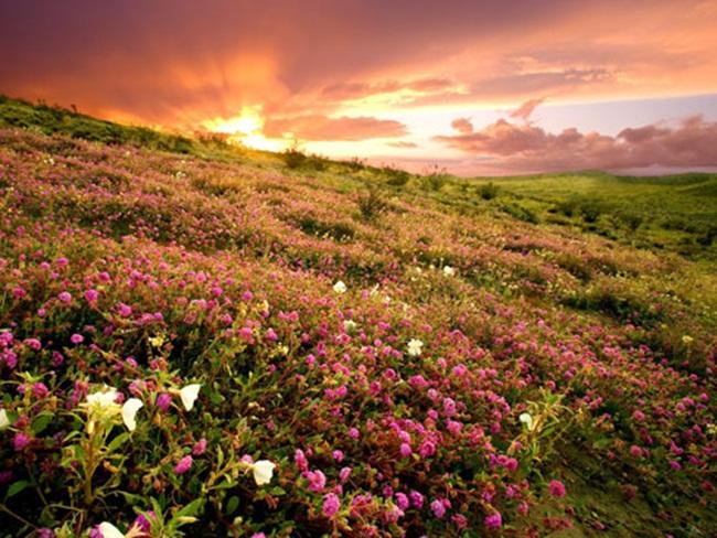 beautiful-nature-views-of-california- (15)