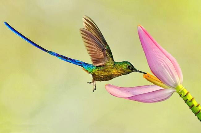 colorful-hummingbirds- (20)