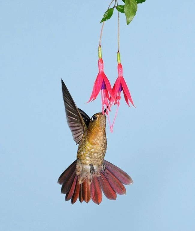 colorful-hummingbirds- (27)