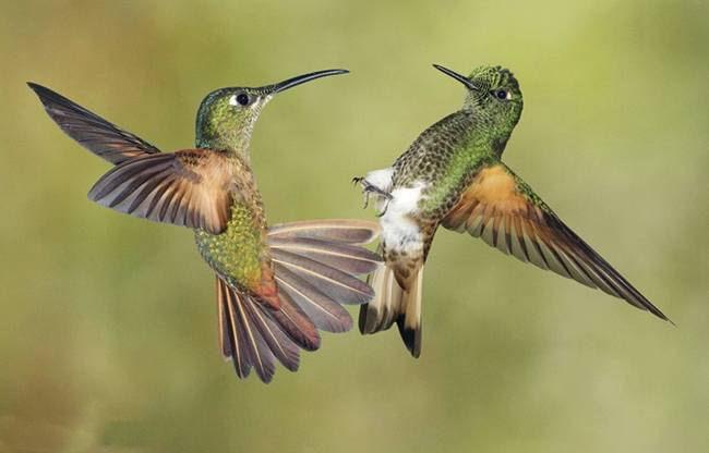 colorful-hummingbirds- (32)