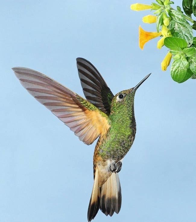 colorful-hummingbirds- (39)